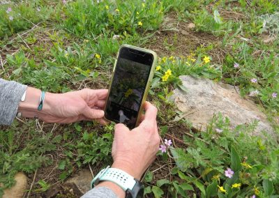 Utilizing the iNaturalist platform in the field